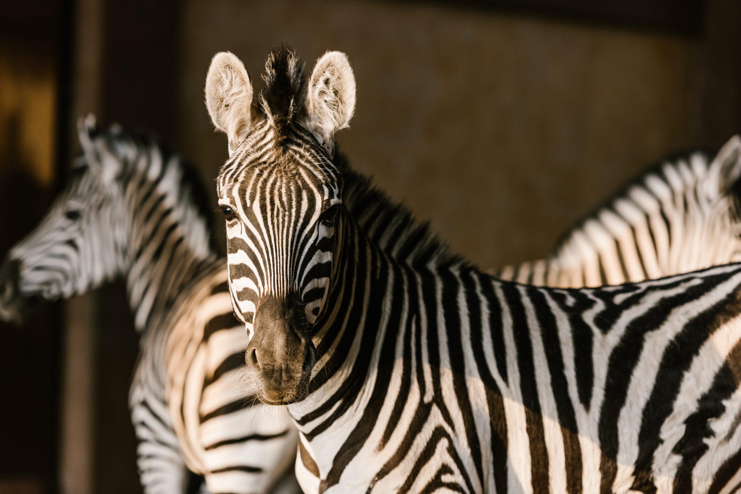 Predictive Analytics For Zebras